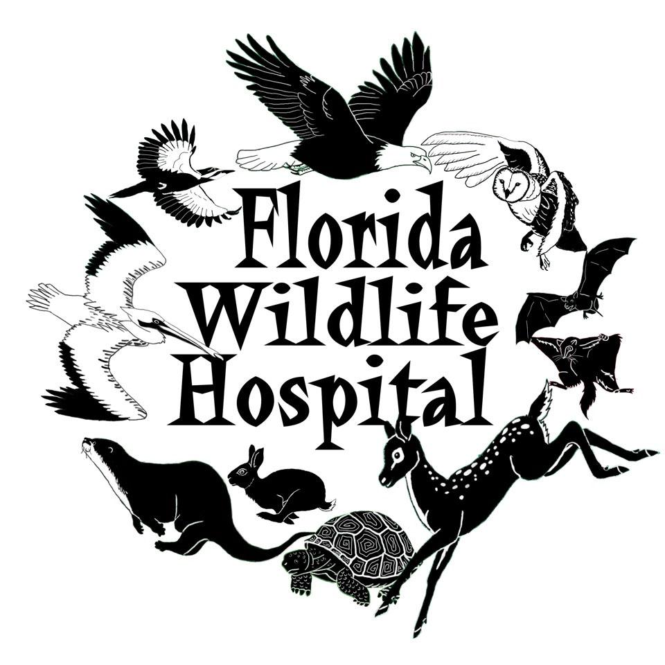 floridawildlifehospital.jpg