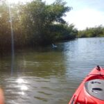Kayaking in the Indian River Lagoon
