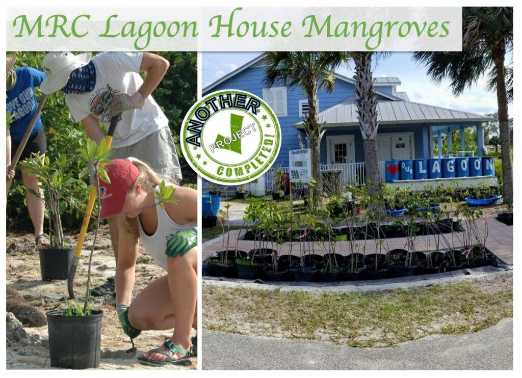 Mangrove plantings to help the lagoon