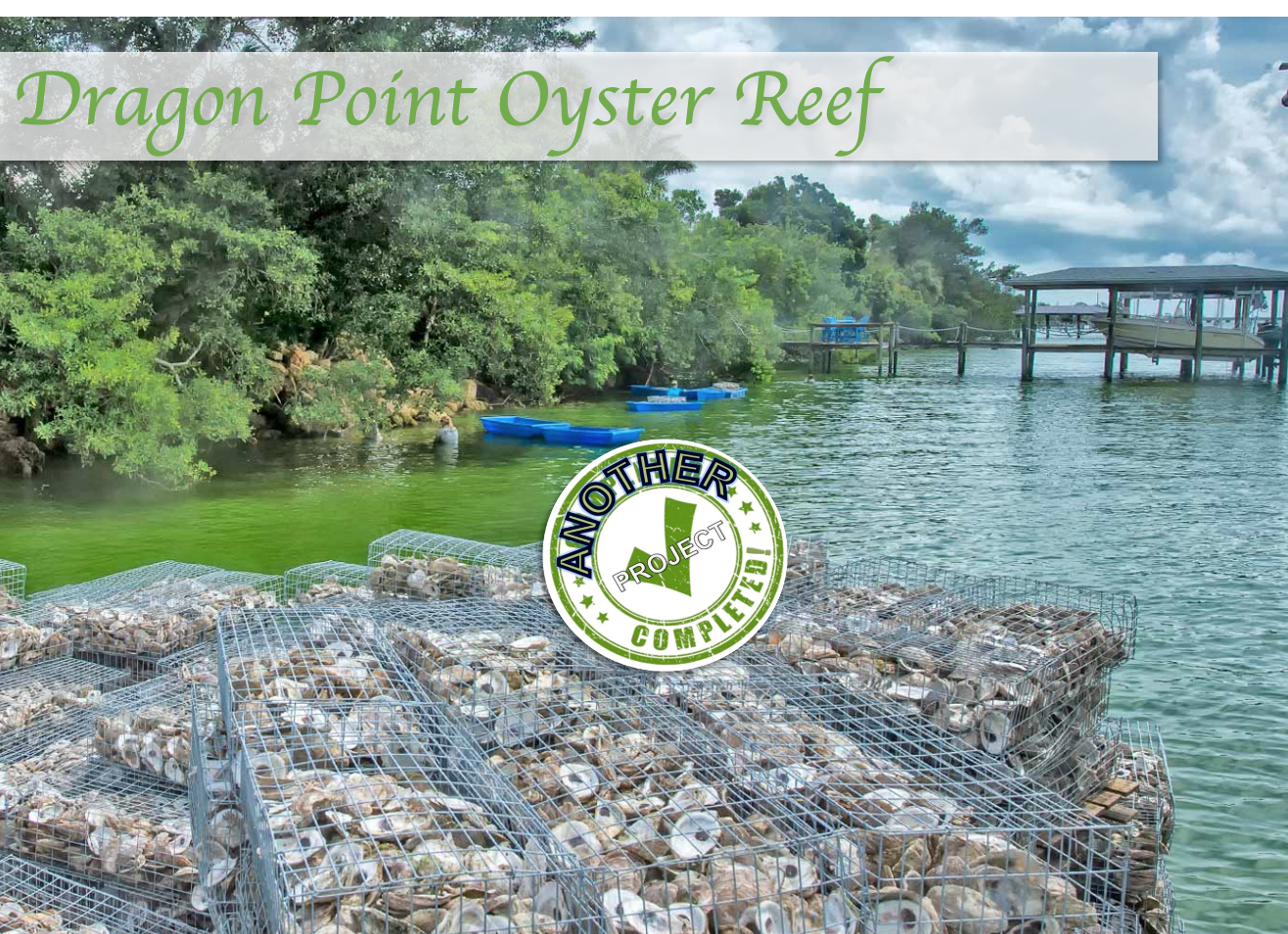 Dragon Point Oyster Reef 1