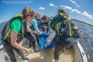 manatee rescue sea world