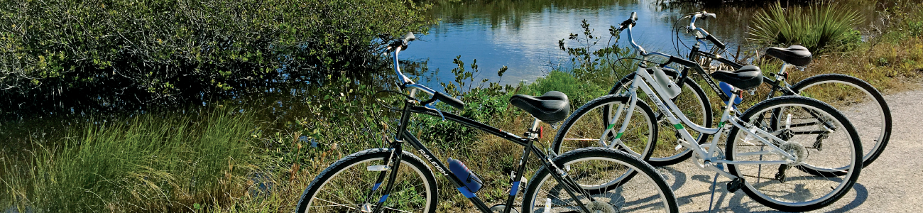 Bicycles parked by the Indian River Lagoon